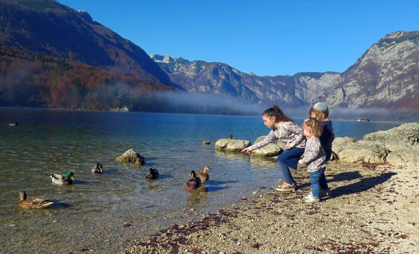 מאכילים ברוזים באגם בוהיני