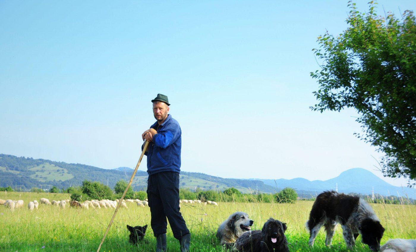 רועה צאן ברומניה