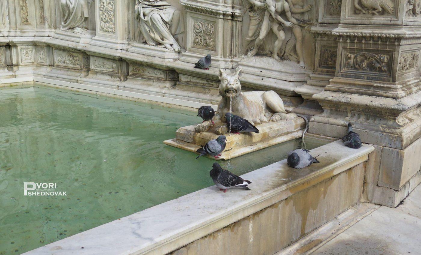מזרקת Fonte Gaia