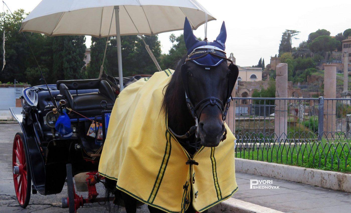 סוס לבוש