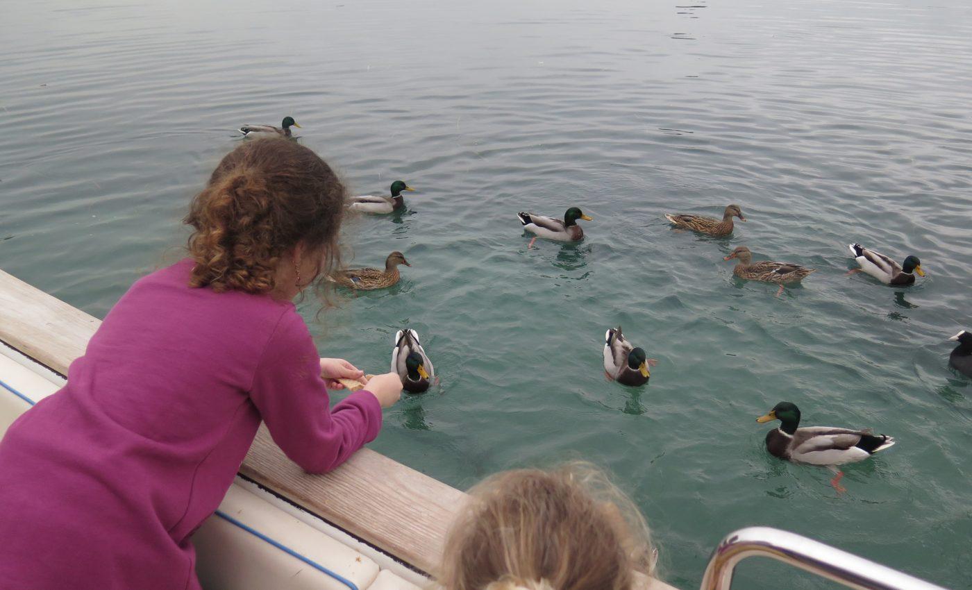 שייט והאכלת ברווזים באגם גארדה