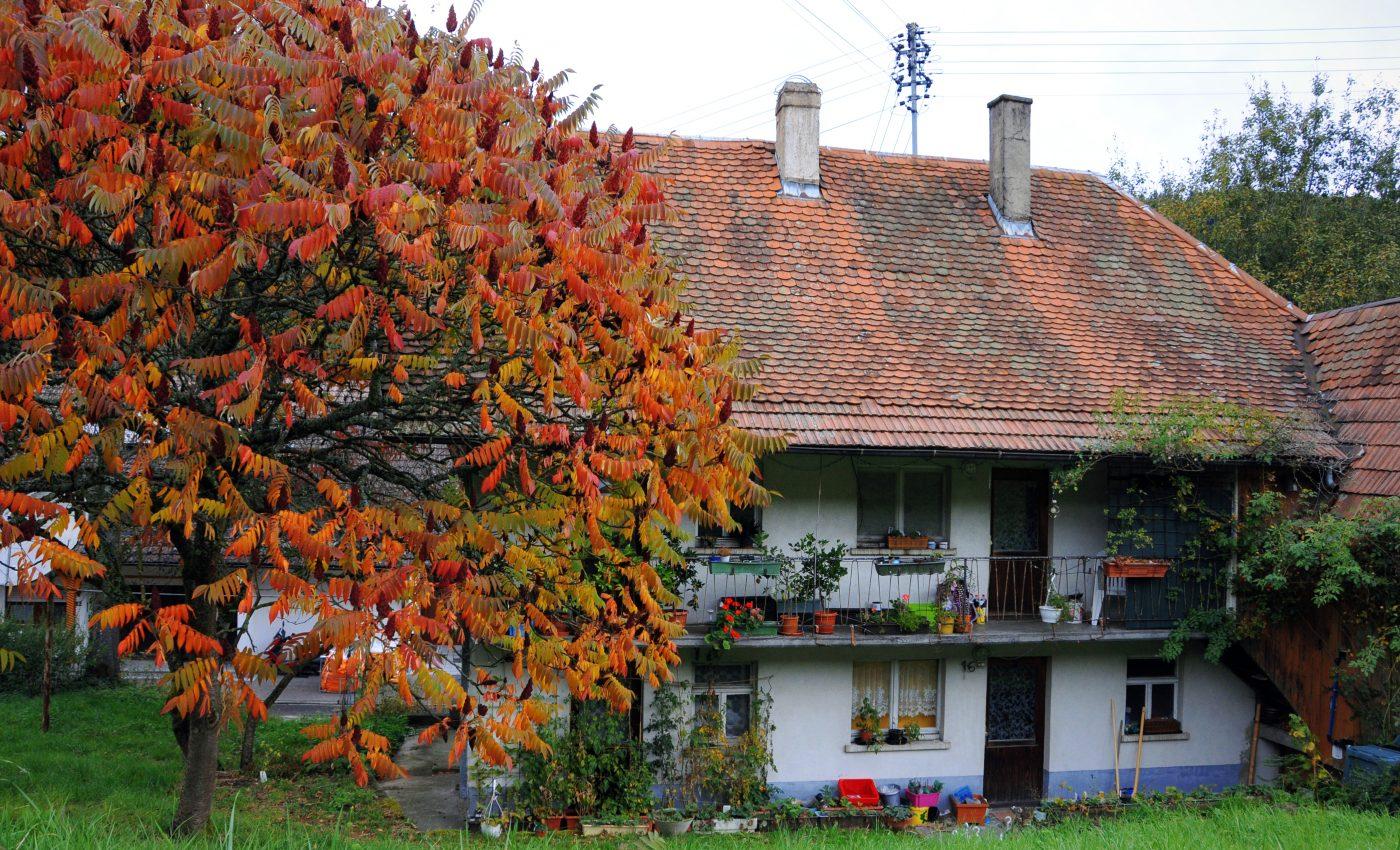 צבעי העץ המפעימים