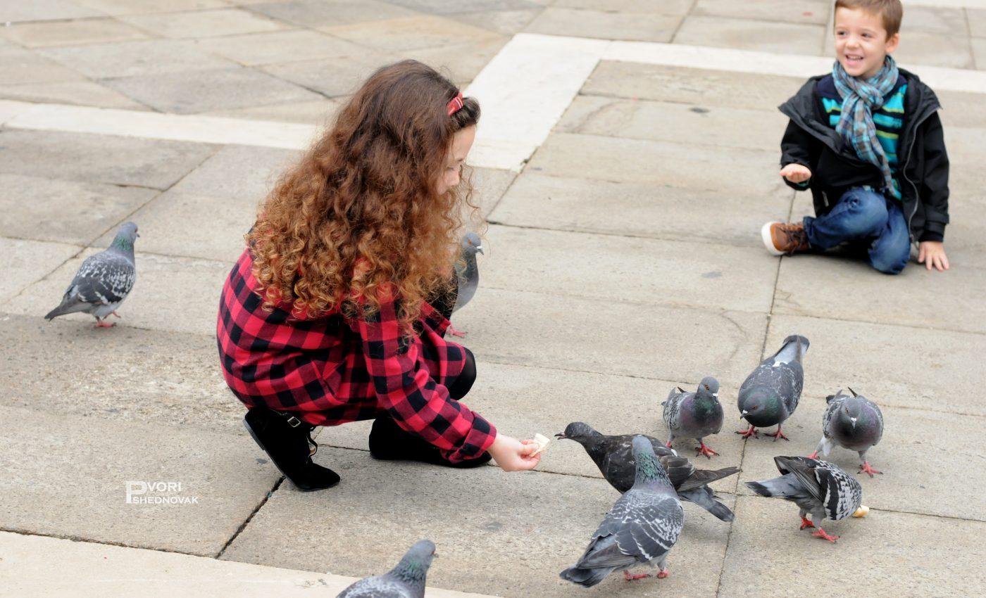 מאכילים יונים בכיכר סן מרקו