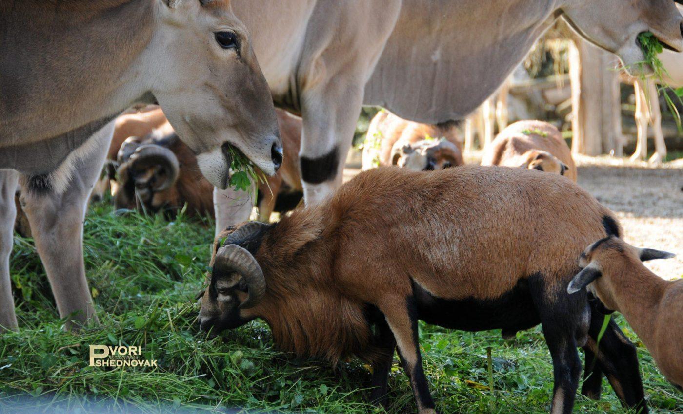 בגן החיות Natura Viva
