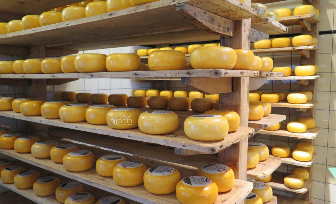 מפעל גבינות בוולנדם