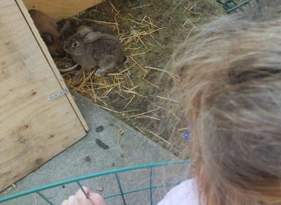 וארנבים