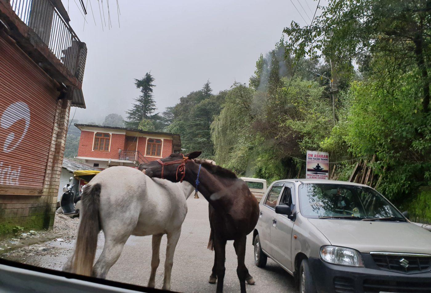 על הכביש בדרך מכפר הילדים לדרמקוט