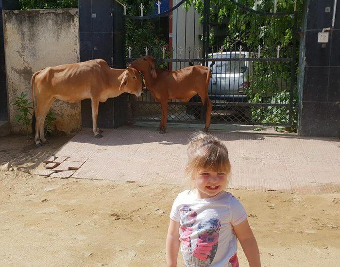 מחוץ למלון פרות,חזירים,כלבים גמלים וקופים מסתובבים חופשי