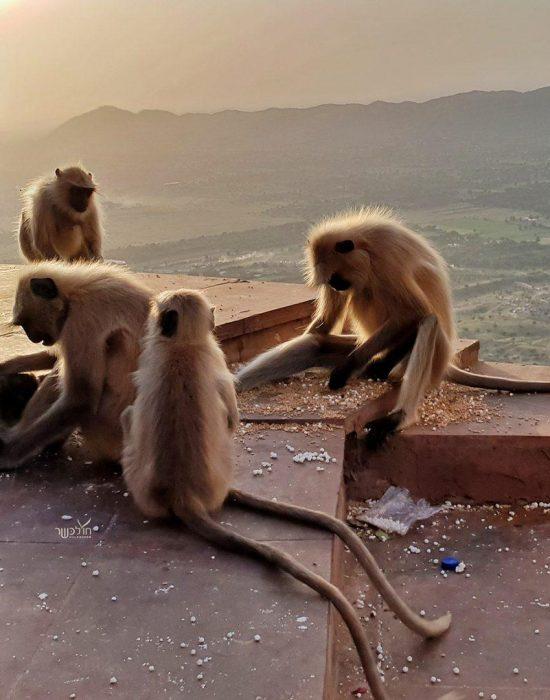 מדלגים בין הקופים בדרך לפסגה