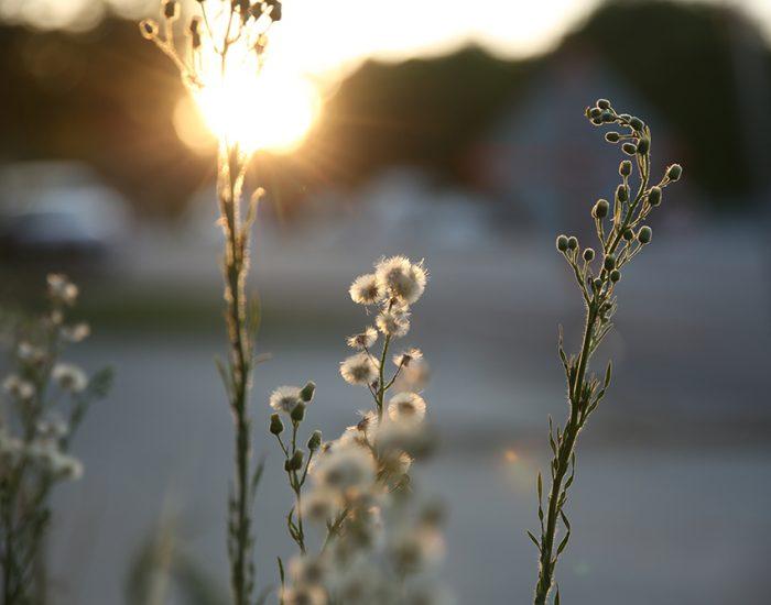 היופי בעיני המתבונן... במקום לראות רחוב אני רואה את השמש בפרחים