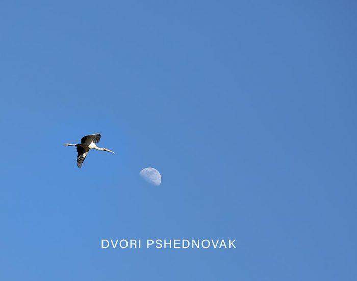 ציפור מגיעה לירח