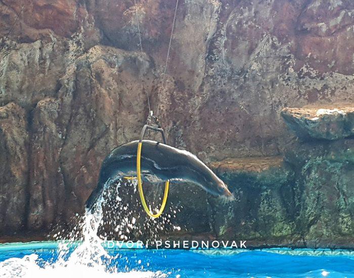 מופע אריות ים באקווריום במסטטלאן