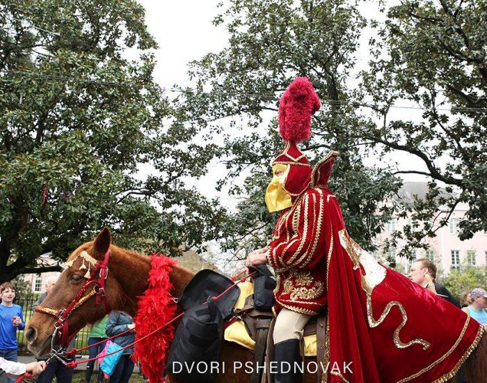 סוסים במרדי גרא בניו אורלינס