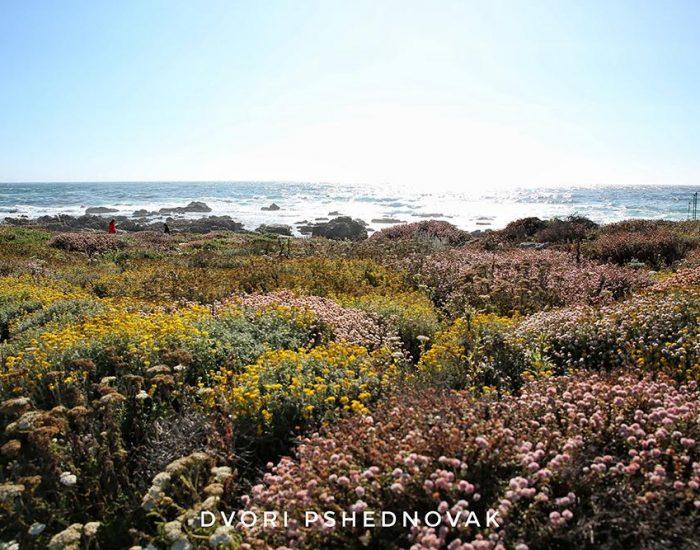 קליפורניה 2020 187-01