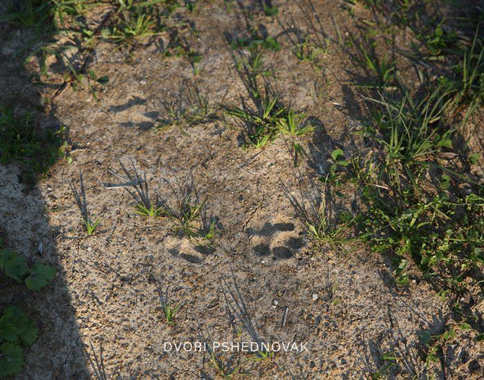 טביעות רגליים בחול