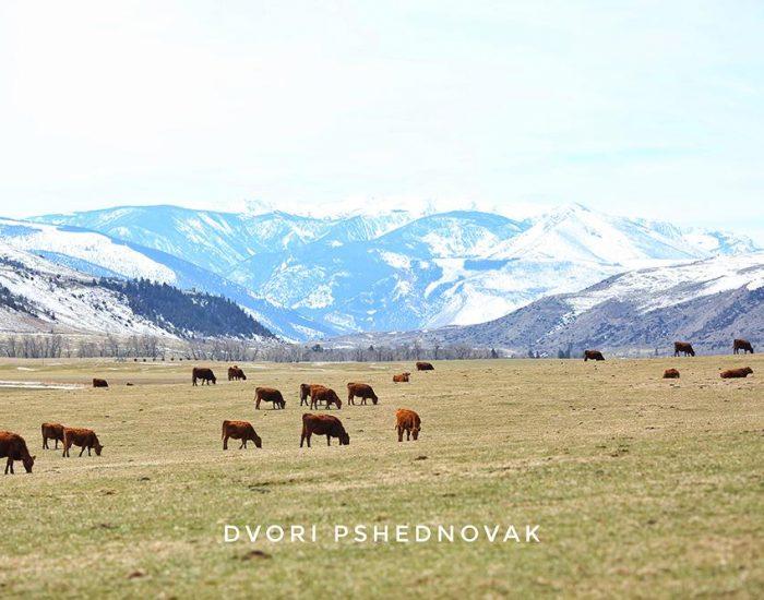 פרות  באחו