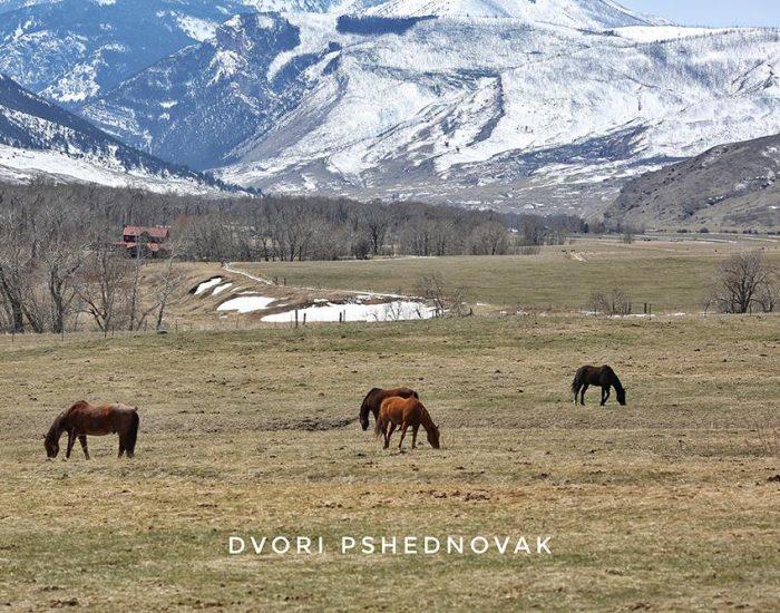 סוסים בשלג