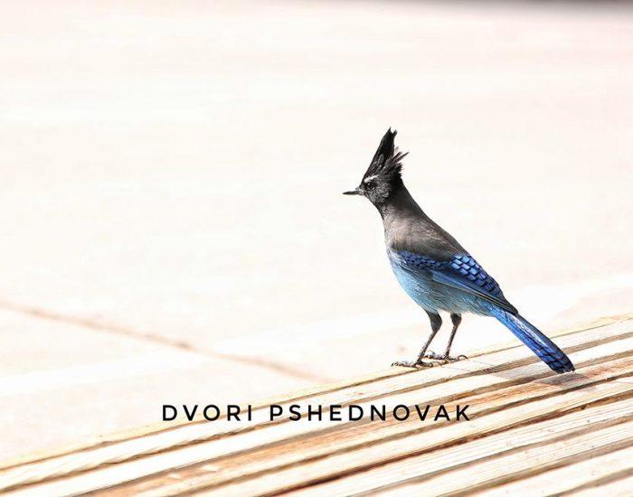 ציפור מיוחדת בברייס קניון