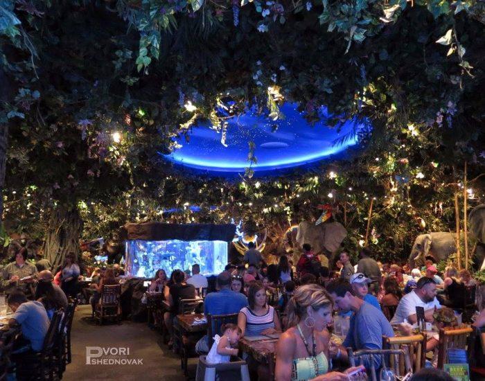 המסעדה המגניבה, מבפנים כמו ג'ונגל