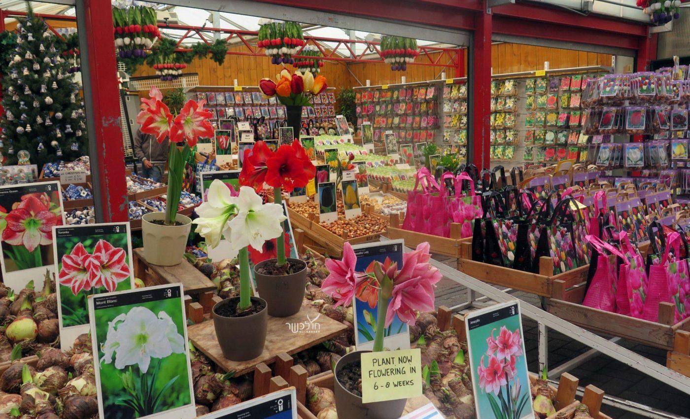 שוק הפרחים בלומנקארט