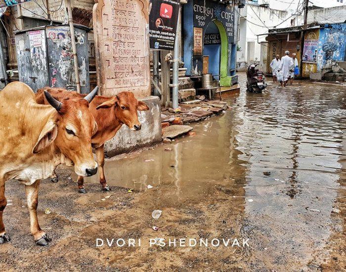 גם השוק מוצף מהגשם