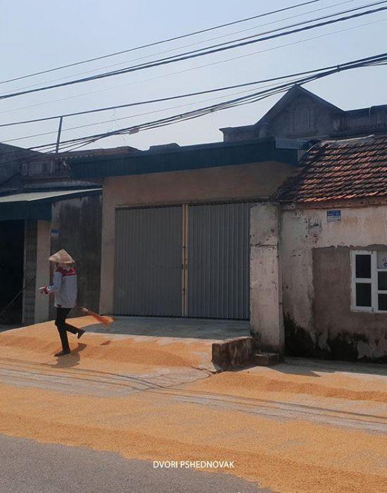 אורז פרוש על הכביש לייבוש בדרך לטאם קוק