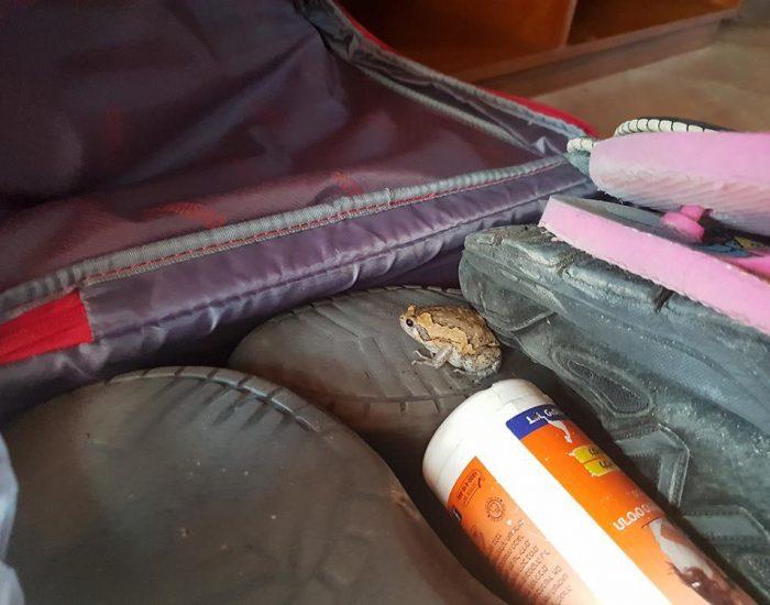 הפתעה במזוודה