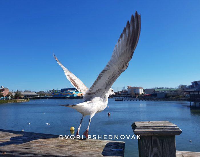 broadway at the beach ציפור חופשיהנוף למכירה טיילת