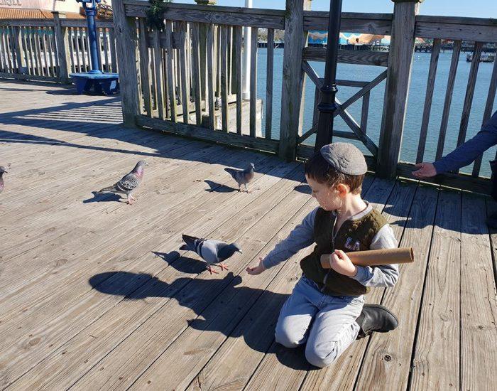 ילד מאכיל ציפורים האכלת חיות