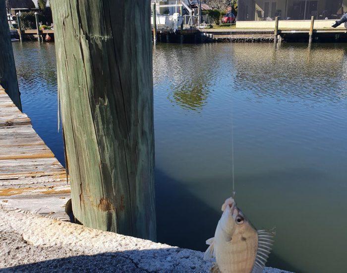 ניסיון ראשון בדייג