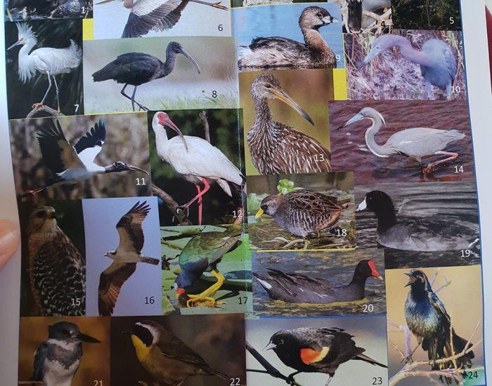 שמות ציפורים מידע שמורת טבע