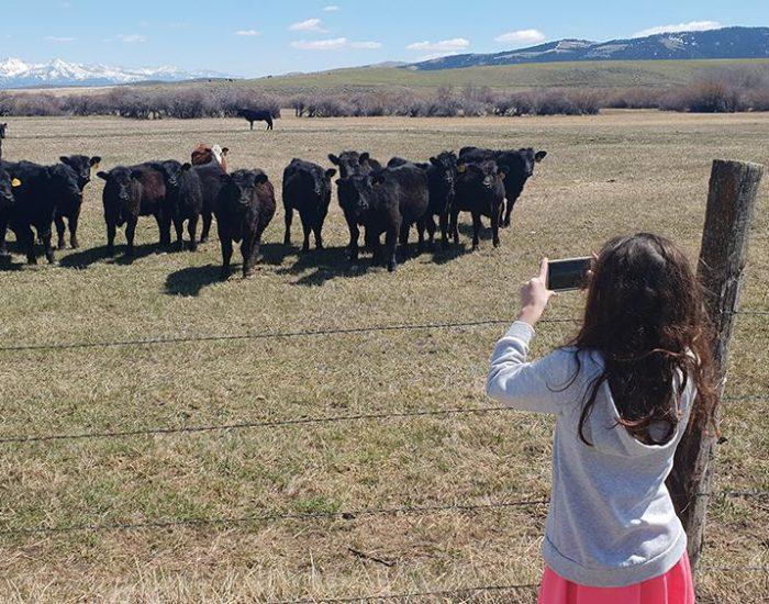 עצירה שניה לצילום פרות