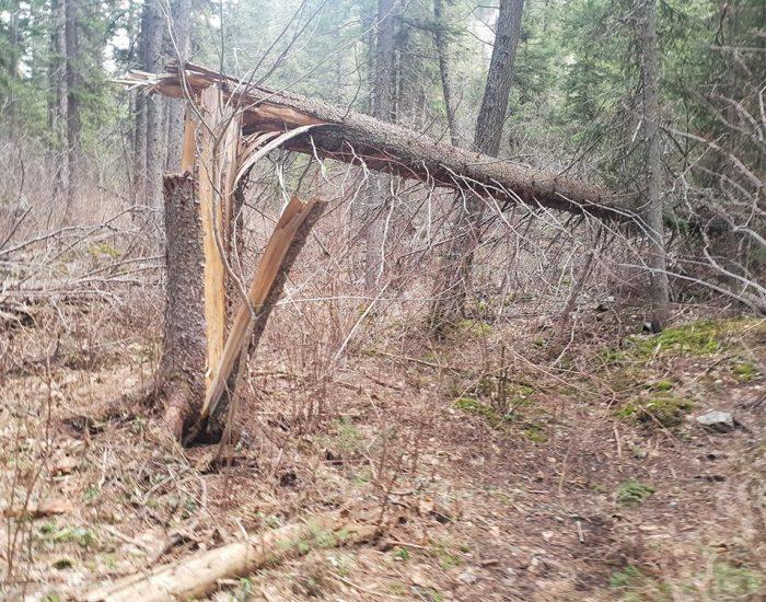 עצים שבורים ונופלים