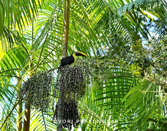 תוכן בג'ונגל