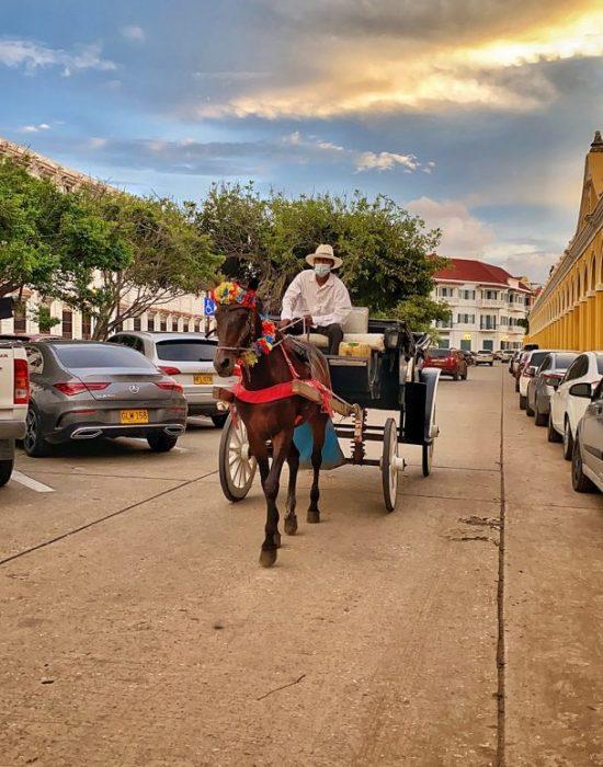 כרכרה עם סוסים ליד הלאס בובדאס