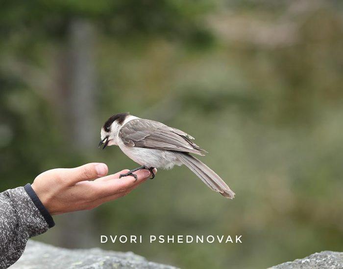 האכלת ציפורים בהר רייניר