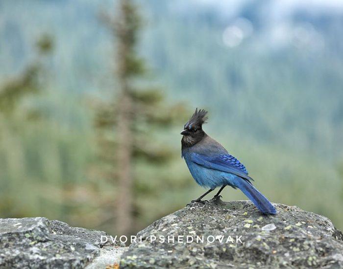 ציפור כחולה יפיפיה