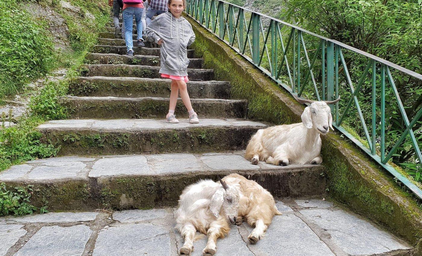 הרבה מדרגות לעלות