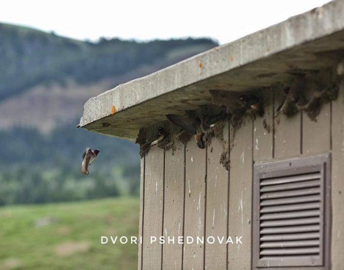 קיני ציפורים על קיר השירותים בפארק