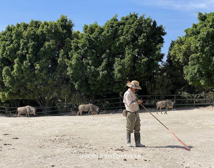 PUEBLA MEXICO חול כשר דבורי פשדנובק (51)