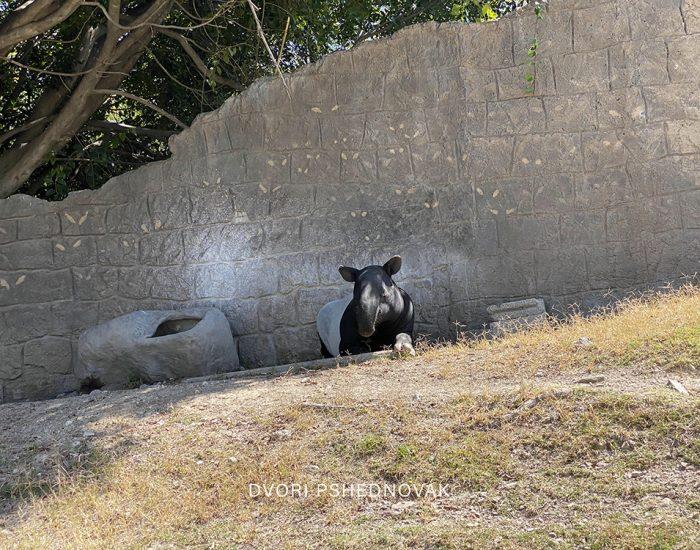 PUEBLA MEXICO חול כשר דבורי פשדנובק (58)