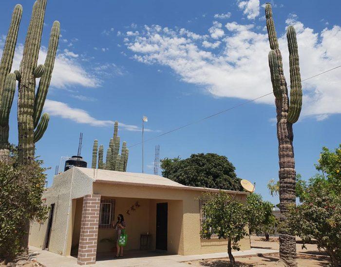 הבית מוקף קקטוסים ענקיים ועצי פרי